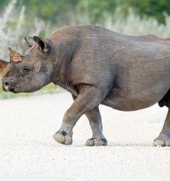 rhino head diagram [ 1200 x 800 Pixel ]