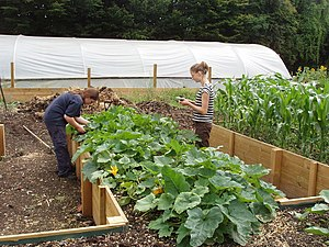 English: Raised vegetable beds for disabled ac...