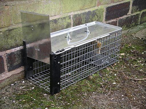 Rat cage trap 3y08