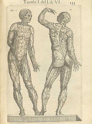 Anatomía y fisiología humana | Actualización de la enfermería