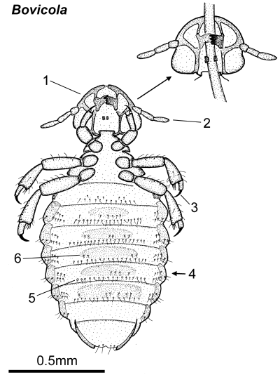 Parasitic Insects, Mites and Ticks: Genera of Medical and
