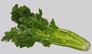 Head of celery, sold as a vegetable. Usually o...