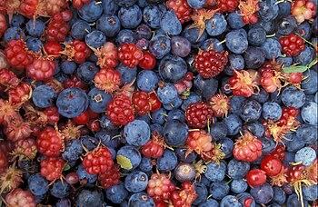 English: Alaska wild berries from the Innoko N...