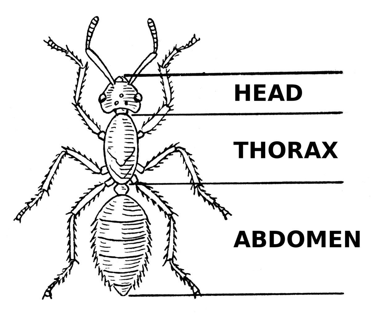 grasshopper diagram labeled bathroom light extractor fan wiring thorax wiktionary