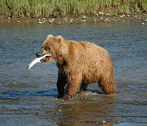 To learn more about Alaska, visit my my Alaska...