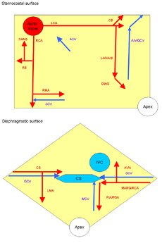 coronary anatomy diagram wall switch outlet wiring circulation - wikipedia