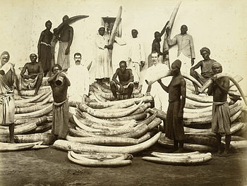 Ivory trade, East Africa, 1880s/1890s Some sli...