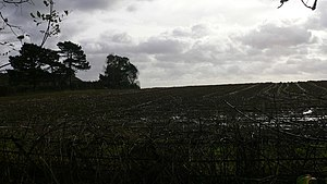 "English: Desolate field on Baynards Road ""..."