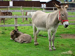 A donkey and foal.