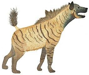 Recreación de Pachycrocuta brevirostris, un pariente de las hienas que competía con el Homo ergaster por el mismo nicho ecológico