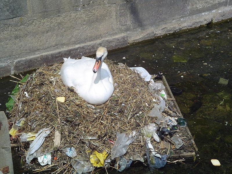 File:Pollution swan.jpg