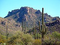 Saguaronationalparl17102008.jpg