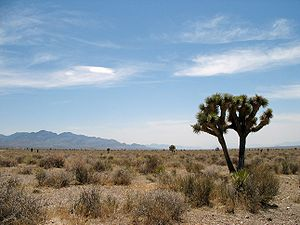English: Basin and range desert in Nevada