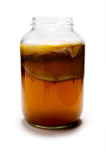 File:Kombucha Mature.jpg