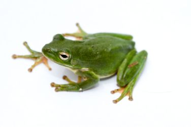 Image result for frog webbed feet pictures