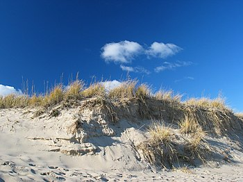 Dune on Cape Cod near Provincetown