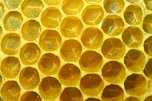Honeycomb of the Western honey bees, with some...