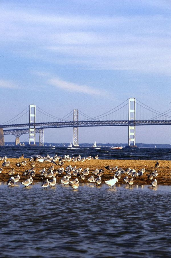 FileChesapeake Bay Bridgejpg Wikipedia