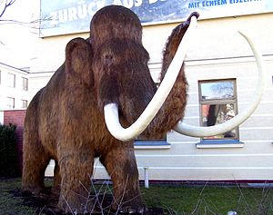 The Woolly Mammoth became extinct around 12,00...