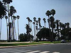 Palm trees line Ocean Avenue