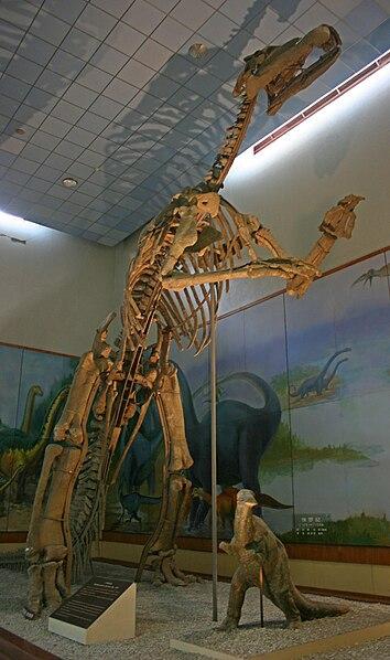 File:Shantungosaurus 2008 09 07.jpg