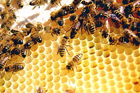 Image result for worker bees