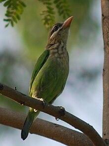 List of birds of Bangalore  Wikipedia
