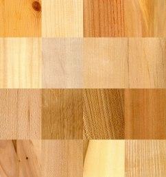 softwood stem diagram [ 1200 x 1476 Pixel ]
