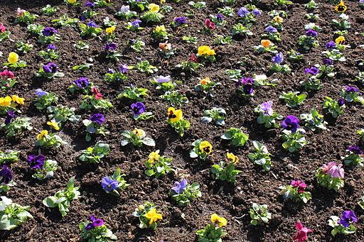 Garden Design Garden Design With Pansies Gardening Tips Uamp
