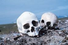 """Skulls on a Beach: """"Currents carry many d..."""