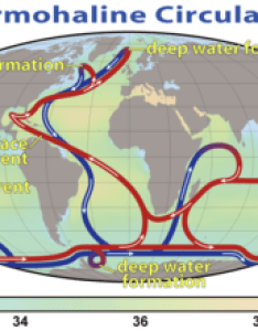 summary of the path thermohaline circulation blue paths represent deep water currents while red surface also wikipedia rh enpedia