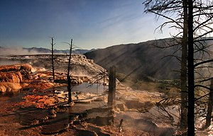 Dead trees in the terraces of , grew during in...