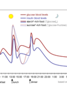 The idealised diagram shows fluctuation of blood sugar red and lowering hormone insulin blue in humans during course  day also medication wikipedia rh enpedia