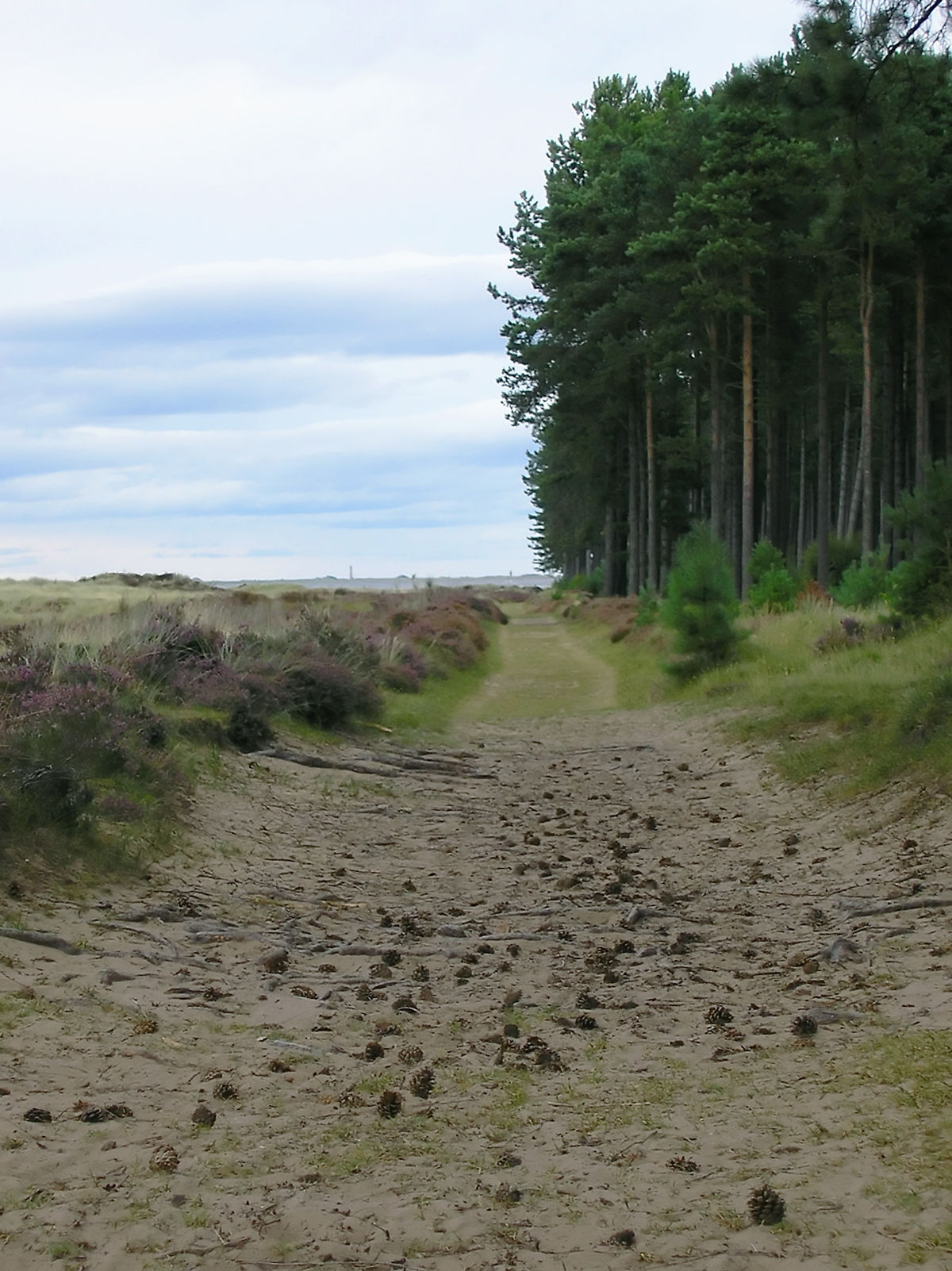 Tentsmuir Forest  Wikipedia