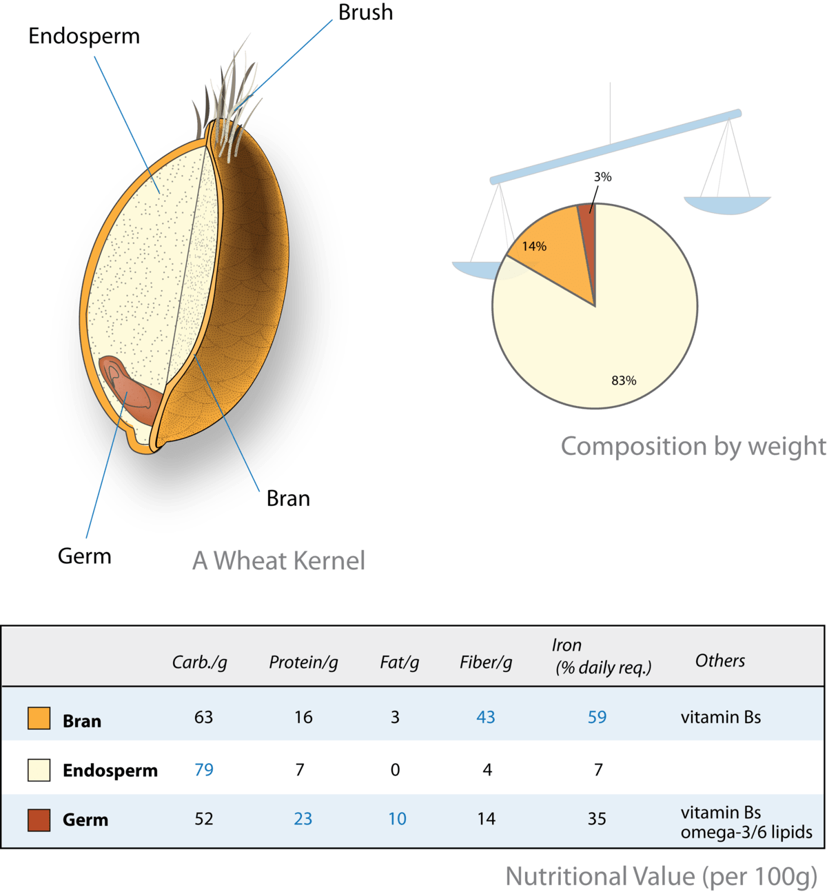 grain kernel diagram smoke detector wiring bran wikipedia