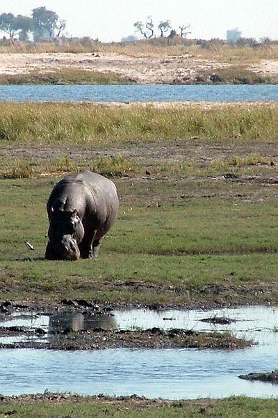 File:Chobe National Park Riverfront Portrait.jpg