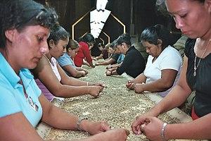 Coffee in El Salvador