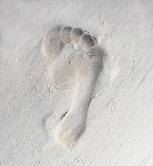 English: Footprint on earth... Photograph from...