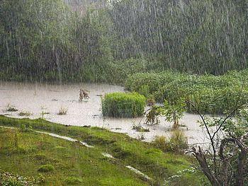 Rain on the field