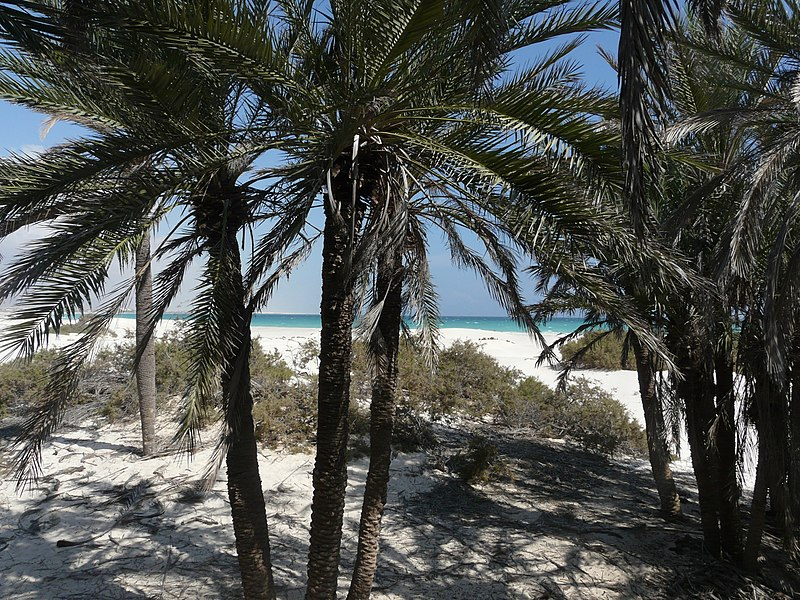 Socotra_-Nawjad01.JP