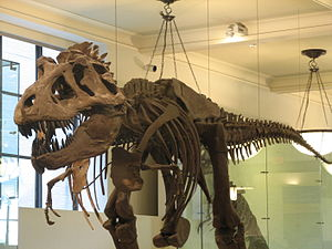 English: A dinosaur in the natural history mus...