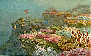 Ancient Coral Reefs