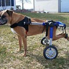 Wheelchair Dog Mccabe Camping Chairs Walkin Wheels Wikipedia Boxer Can Walk And Play Again