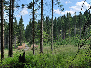 English: Forest on the Fichtelberg in Saxony, ...