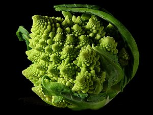 English: The fractal shape form of a Romanesco...