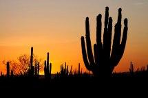 Sonora Messico - Wikivoyage Guida Turistica Di Viaggio