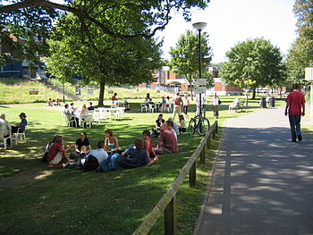 University of Sussex Campus in Summer