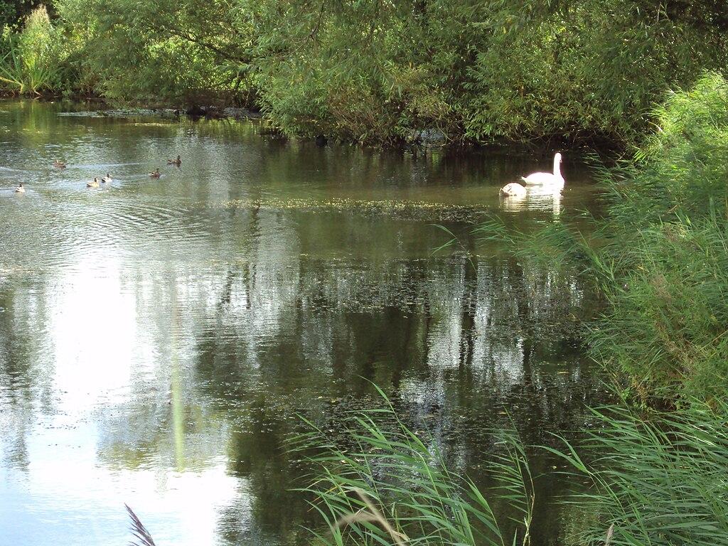 FileFishing pond MeolsJPG  Wikimedia Commons