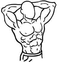 Isometria (anatomia)