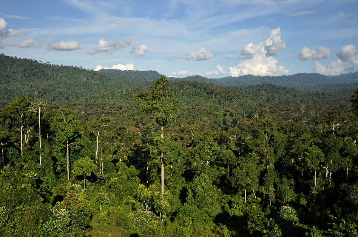 Tropical Forest  Wikipedia